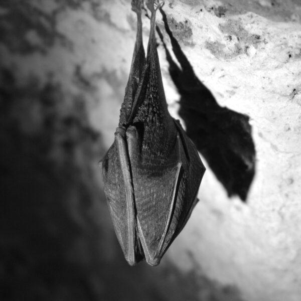 Footage from night time bat surveys