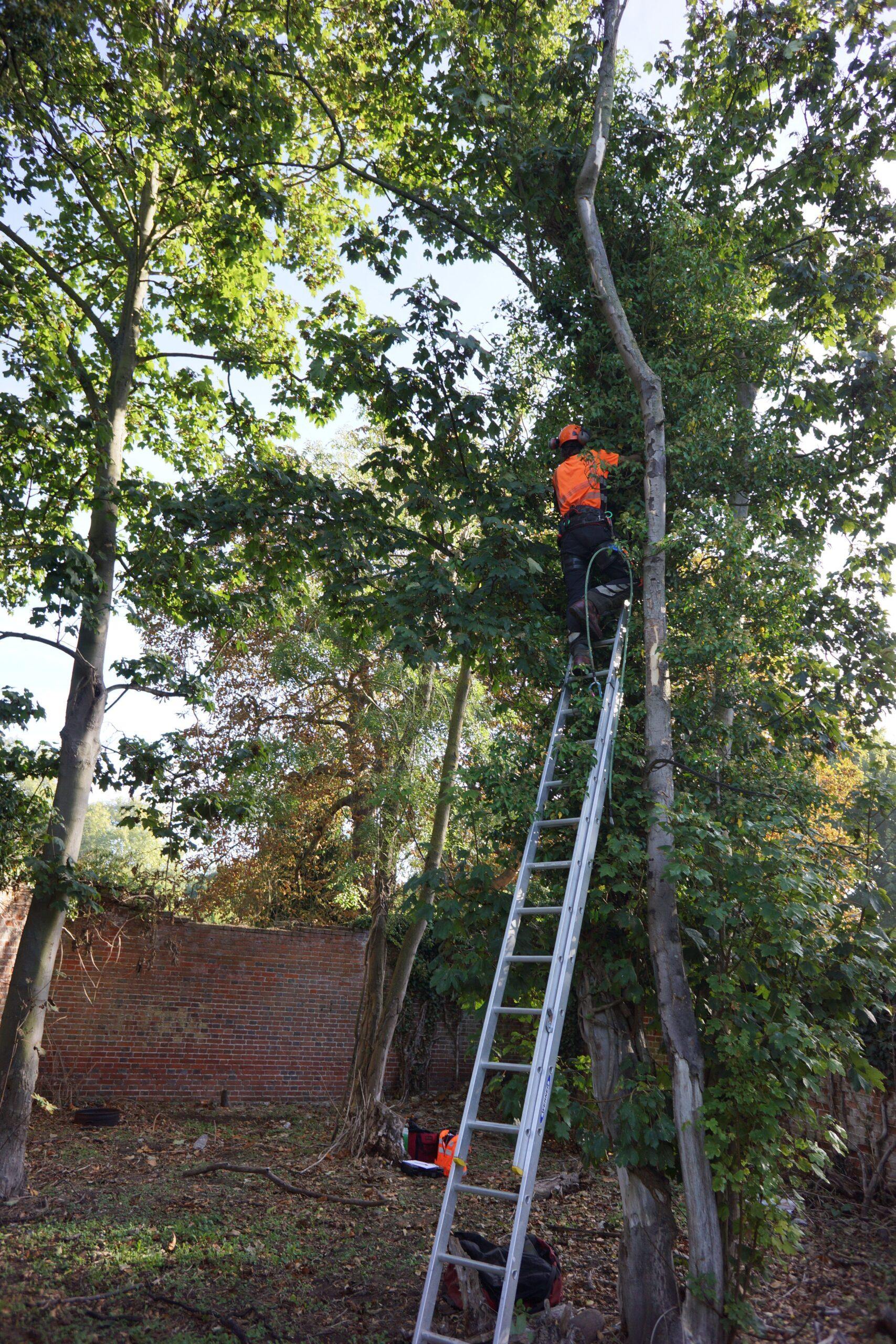 Arboricultural Surveys