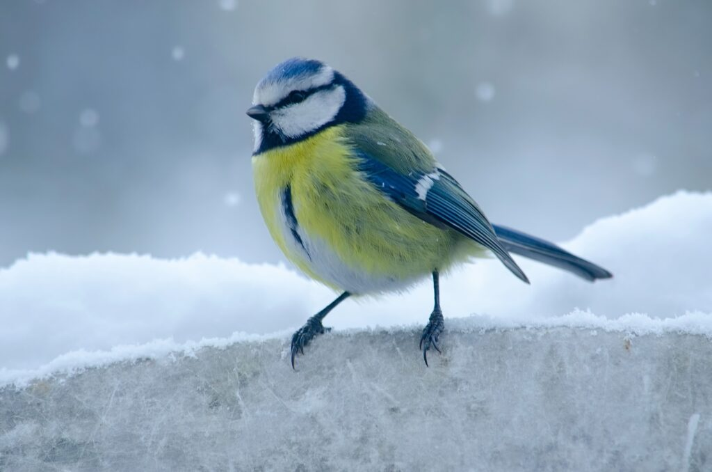Why Are Wintering Bird Surveys Important?